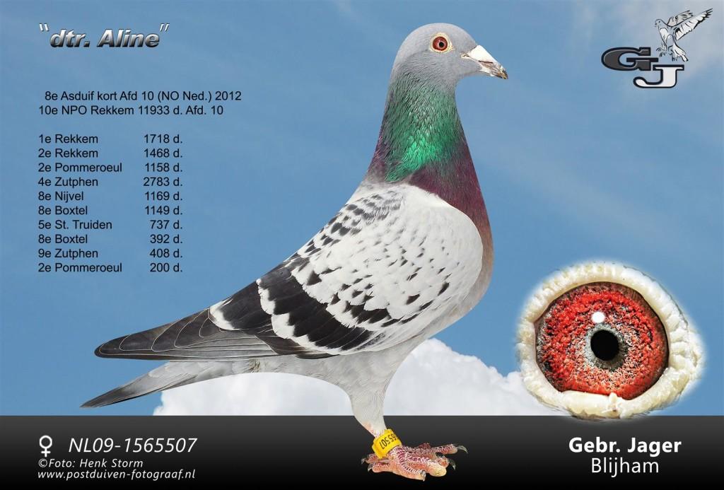 NL09-1565507 Dochter Aline