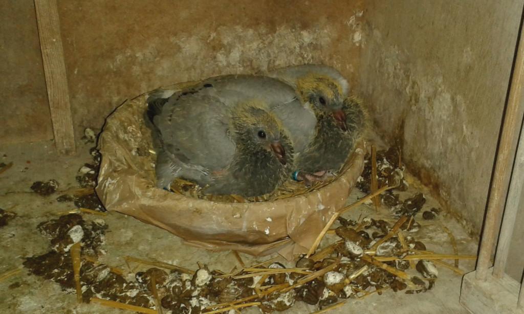 jongen nest